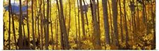 Poster Print Wall Art entitled Aspen trees in autumn, Colorado,