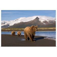 Poster Print Wall Art entitled Grizzly sow and cubs walking on beach at Hallo