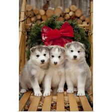 Poster Print Wall Art entitled Siberian Husky puppies in traditional wooden dog