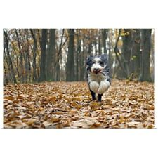 Poster Print Wall Art entitled Dog running in forest with autumn leaves fallen.