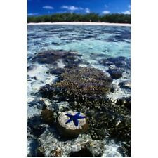 Poster Print Wall Art entitled Coral and blue star fish, Lady Elliot Island,