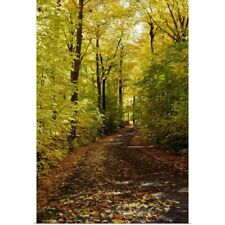 Poster Print Wall Art entitled Autumn leaves falling on trail in forest, Quebec,