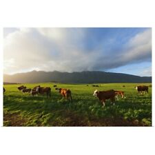 Poster Print Wall Art entitled Wide Angle view of cows grazing in a bright green