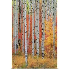 Poster Print Wall Art entitled A forest of aspen and maple trees in the Wasatch