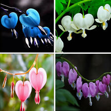 10pcs Hot Perennial Herbs Dicentra Garden Home Plant Bleeding Heart Flower Seeds