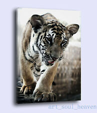 Original Oil Painting HD Print Wall Decor on Canvas,tiger cub 24x36(Unframed)