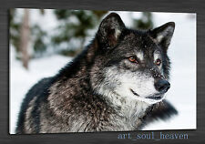 Original Oil Painting HD Print Wall Decor Canvas,Wolf, Muzzle, Eyes (Unframed)