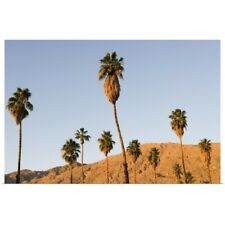 Poster Print Wall Art entitled Palm trees and the San Jacinto Mountains in Palm
