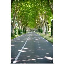 Poster Print Wall Art entitled Allee of trees, St.-Remy-De-Provence, France