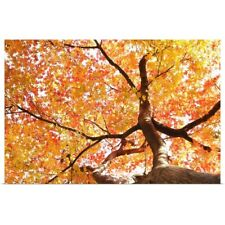 Poster Print Wall Art entitled Red autumn maple leaves,maple tree