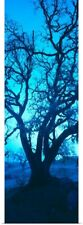 Poster Print Wall Art entitled Silhouette of oaks trees, Central Coast,