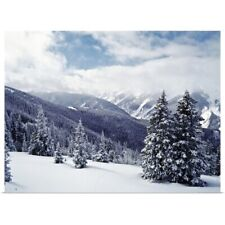 Poster Print Wall Art entitled Snow Covered Pine Trees On Mountain, Aspen,