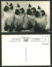 4 Siamese Cats Kittens The Quads Cat Kitten Old Real Photo Postcard Pets Animals