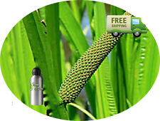 PURE CALAMUS  ESSENTIAL OIL Acorus Calamus NATURAL ESSENTIAL OIL UNDILUTED