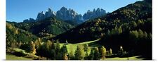 Poster Print Wall Art entitled Trees on a landscape, Dolomites, Funes Valley, Le