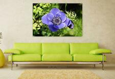 Stunning Poster Wall Art Decor Anemone Wood Anemone Flower Bloom 36x24 Inches