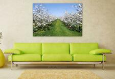 Stunning Poster Wall Art Decor Cherry Trees Cherry Blossom Spring 36x24 Inches