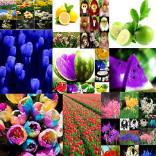 Lot Various Rare Flower Fruit Vegetables Plant Seed Beautiful Home Garden Seeds