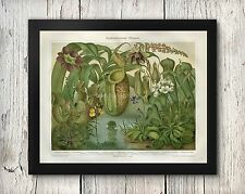 Botanical Carnivorous Plants Venus Fly Trap Antique Look Poster Print 8x10-30x40