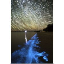 Poster Print Wall Art entitled Star trails and bioluminescence, Gippsland Lakes,