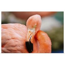 Poster Print Wall Art entitled Curacao, Caribbean pink flamingo