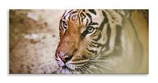 Tiger Face Canvas Hunting Abstract Cat Panorama Wall Art Picture Home Decor