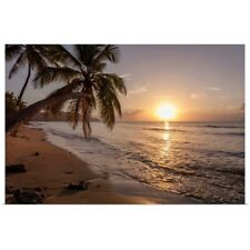 Poster Print Wall Art entitled A palm tree silhouette at sunset, St. Croix,
