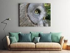 Framed Canvas Stretched Print Tawny Vulture Tawny Owl Owl