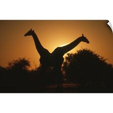 Wall Decal entitled Giraffe Pair Silhouetted at Dusk. Kruger National Park,