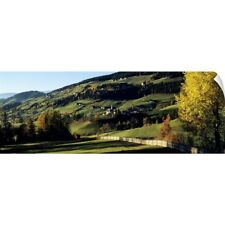 Wall Decal entitled Trees on a rolling landscape, Tyrol, Dolomites, Italy