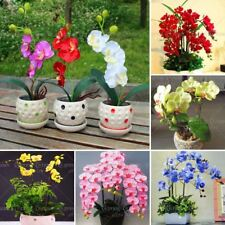 50 pcs/bag orchid bonsai Butterfly phalaenopsis potted flower seeds perennial ga