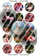 Pre-Cut Bottle Cap Images - Wildlife Birds 1 Inch Circles
