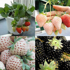 Be 100X Strawberry Seeds Nutritious Delicious EVERBEARING Fruits Vegetables Seed