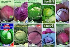 Seeds of Cabbage * Choice * - 0.5 gram