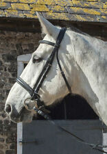 Heritage English Leather Comfort Bridle With Cavesson Noseband