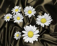 Daises Aglow-Yellow  Home Decor Picture Wall Art Floral Bedroom-Living Room 1