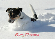 Christmas Card DOG Unique 10 Pack 2 Styles A6 Size NEW Jack Russell Collie