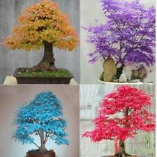 Potted Plant Seed 20 PCS Maple Tree Seeds Bonsai Home & Garden NEW~