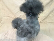 """8 + Bearded Silkie Hatching Eggs Assorted Colors  """"NPIP"""""""