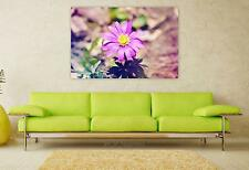 Stunning Poster Wall Art Decor Balkan Anemone Anemone Flower Plant 36x24 Inches