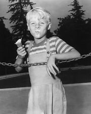 Dennis the Menace Jay North Poster or Photo
