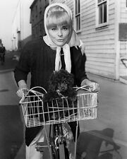 Elke Sommer 1960's Pose Riding Bicycle with Dog in Basket Poster or Photo