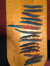 Scarlet Macaw Feathers, Lot Of 15