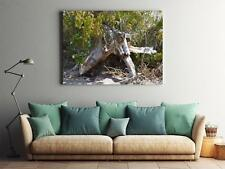Framed Canvas Stretched Print Old Root Root Tree Root Old Tree