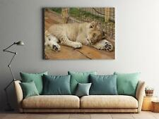 Framed Canvas Stretched Print Animal The Lion Cub Zoo Lion Cub