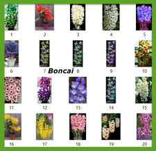 100 pcs Orchid Bonsai Tree seeds Dendrobium potted Flower plants home Indoor top