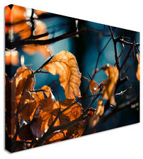 Large Orange Leaves Blue Woods Flower Canvas Wall Art Prints Pictures