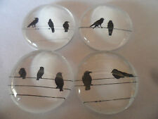 4 x Birds on a wire Images Glass Cabochons, Jewellery Projects,Scrapbook,Crafts