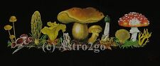 MUSHROOMS--Toadstools Fungus Fungi Allman Bros. Science Nature T shirt S-XXL