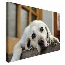 Tired Lazy Labrador Canvas Art Cheap Wall Print Home Interior